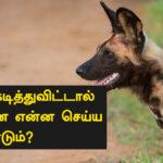 dog bite treatment in Tamil
