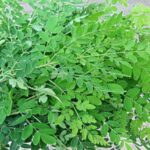 drumstick leaf benefits in tamil