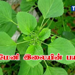 kuppaimeni uses in tamil